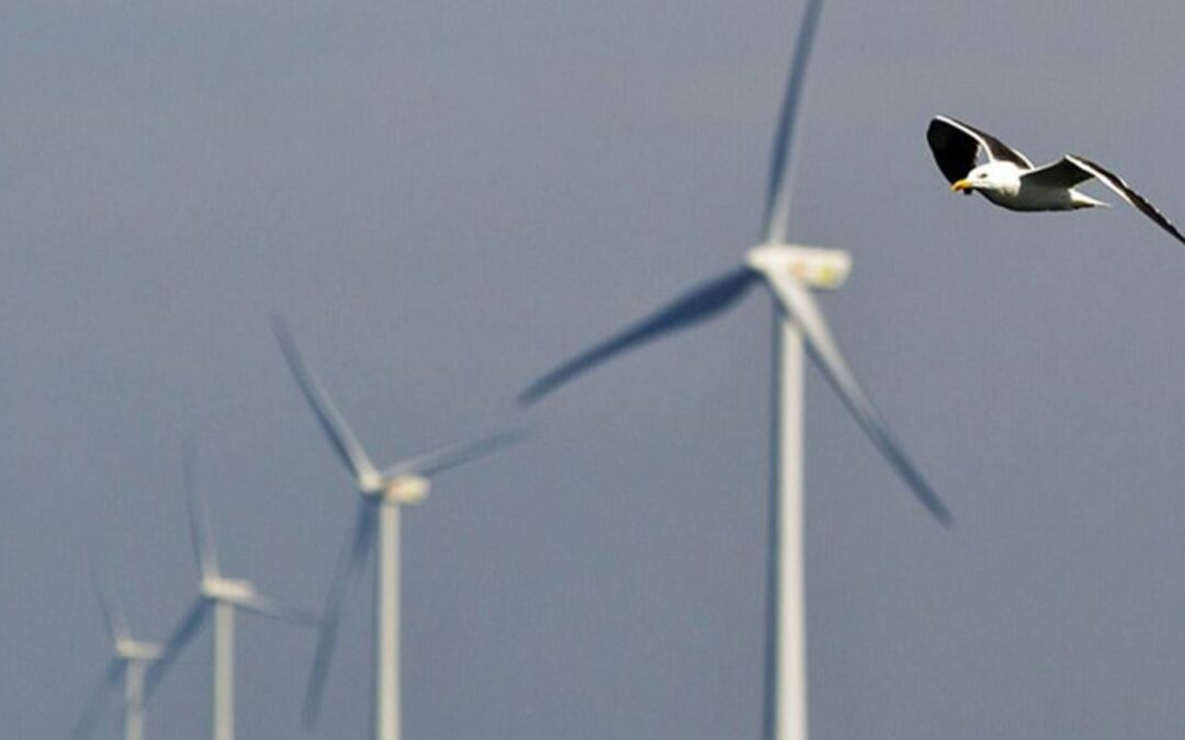De Participatieraad steunt het initiatief voor een Burgerberaad Klimaat